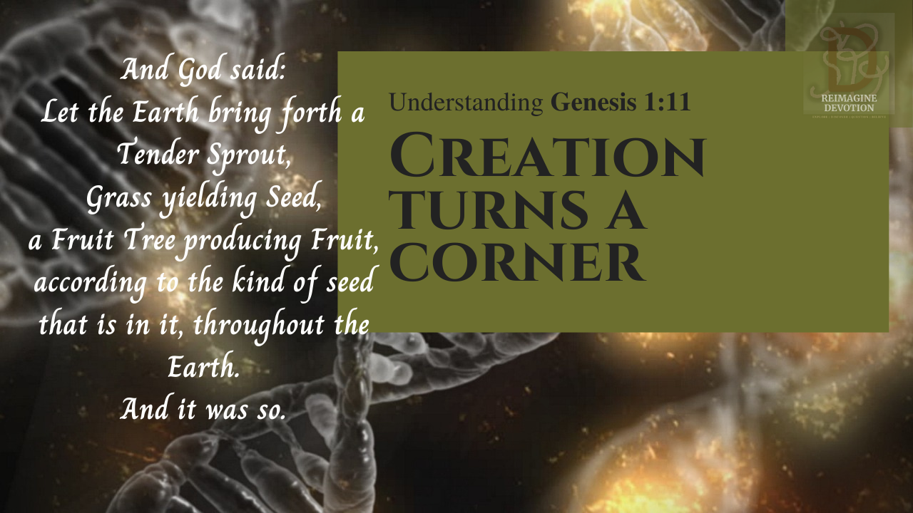 Understanding Genesis chapter 1 verse 11 | And God said, let the earth bring forth a tender sprout, grass yielding seed, a fruit tree yielding fruit according to the kind of see that is in it throughout the earth. and It was so.